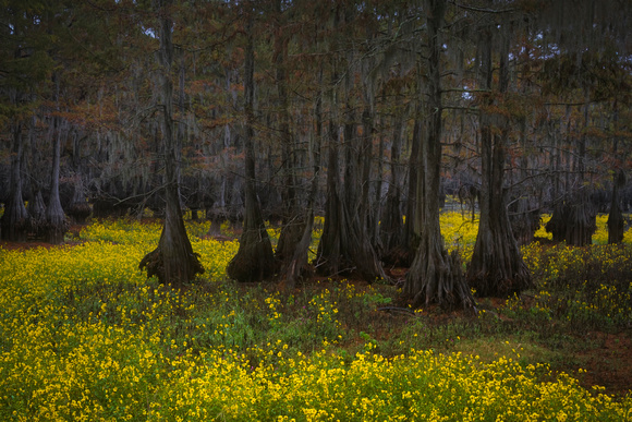 The Yellow Bayou